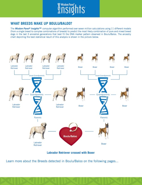 DNA Report for Boulu aka Lanther